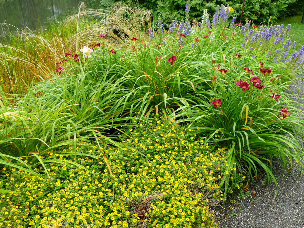 Colourful flowers and reeds beside a pond