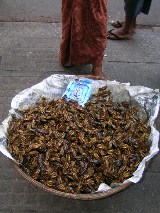 Roasted crickets in a big basket at the feet of the vendor