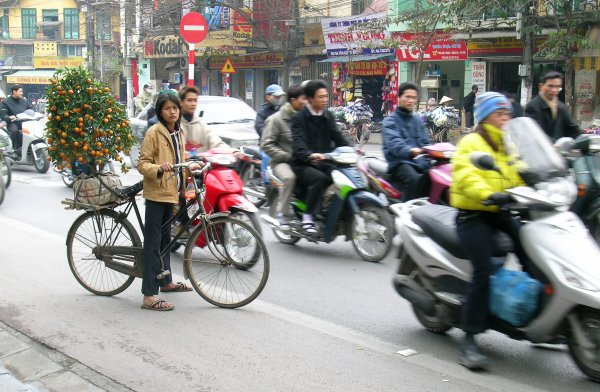 A young woman with a kumquat tree on the back of her bicycle on the streets of Hanoi as scooters fly past.